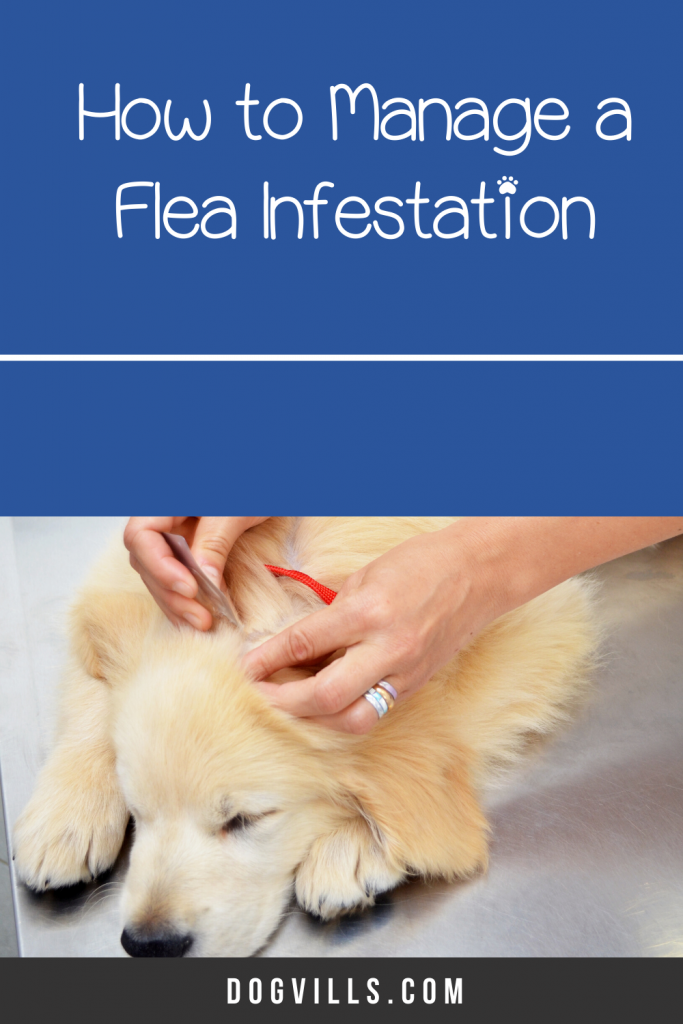 Managing a flea infestation in your bed is the stuff of