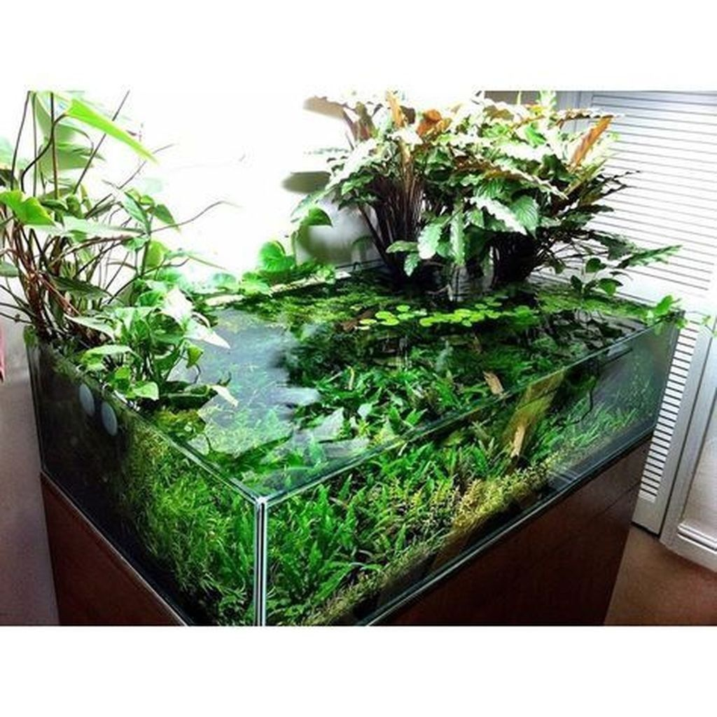 27+ Awesome Aquascaping Ideas You Will Totally Love
