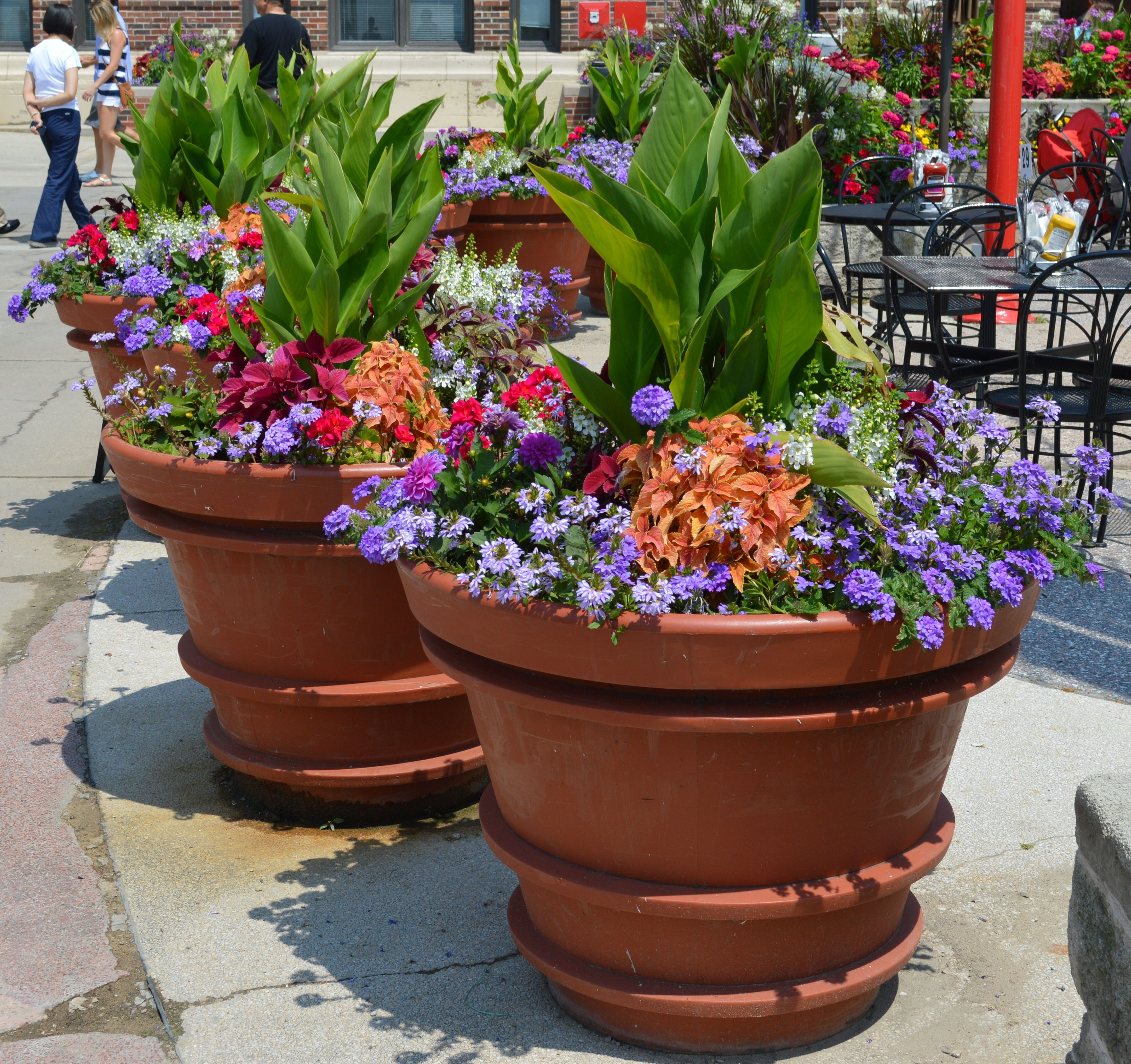 large containers summer annuals full sun repetition of design