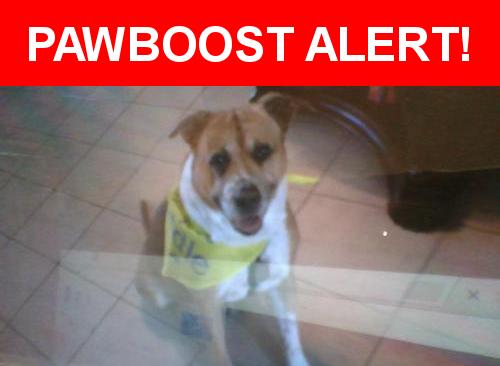 Please spread the word! Tut was last seen in Wichita, KS 67209.    Nearest Address: Near S Milstead St & S Milstead Ct