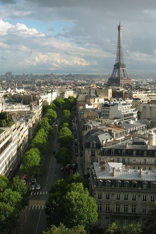 Paris tree lined street