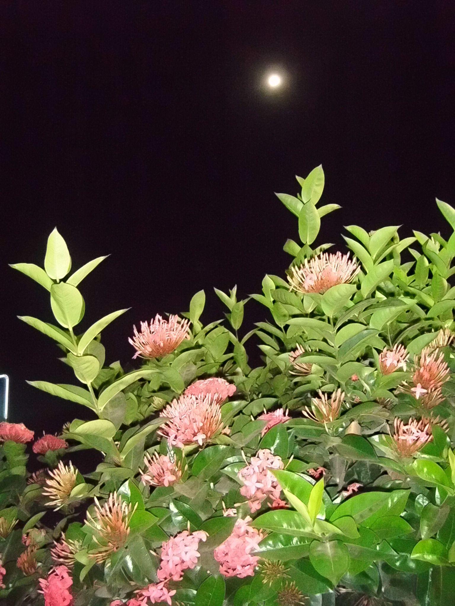 Noche romántica en Mazunte, Oaxaca.