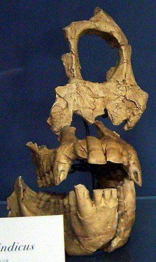 Sivapithecus es un género extinto de primates homínidos del Mioceno. Sus fósiles, datados hace 12,5 millones de años de antigüedad.