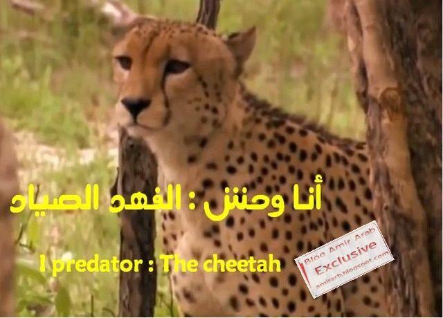 مدونة أمير العرب Blog Amir Arab أنا وحش الفهد الصياد I Predator The Cheetah وثائقي مشوق عن أسرع حيوان على الأرض Cheetah Predator Playbill