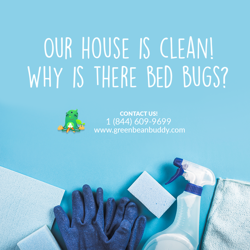 Myth Buster Bed bugs can also be found in clean homes