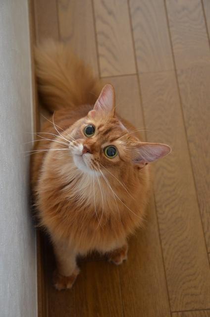 LuLu  #neko #cat  (via nyangle)