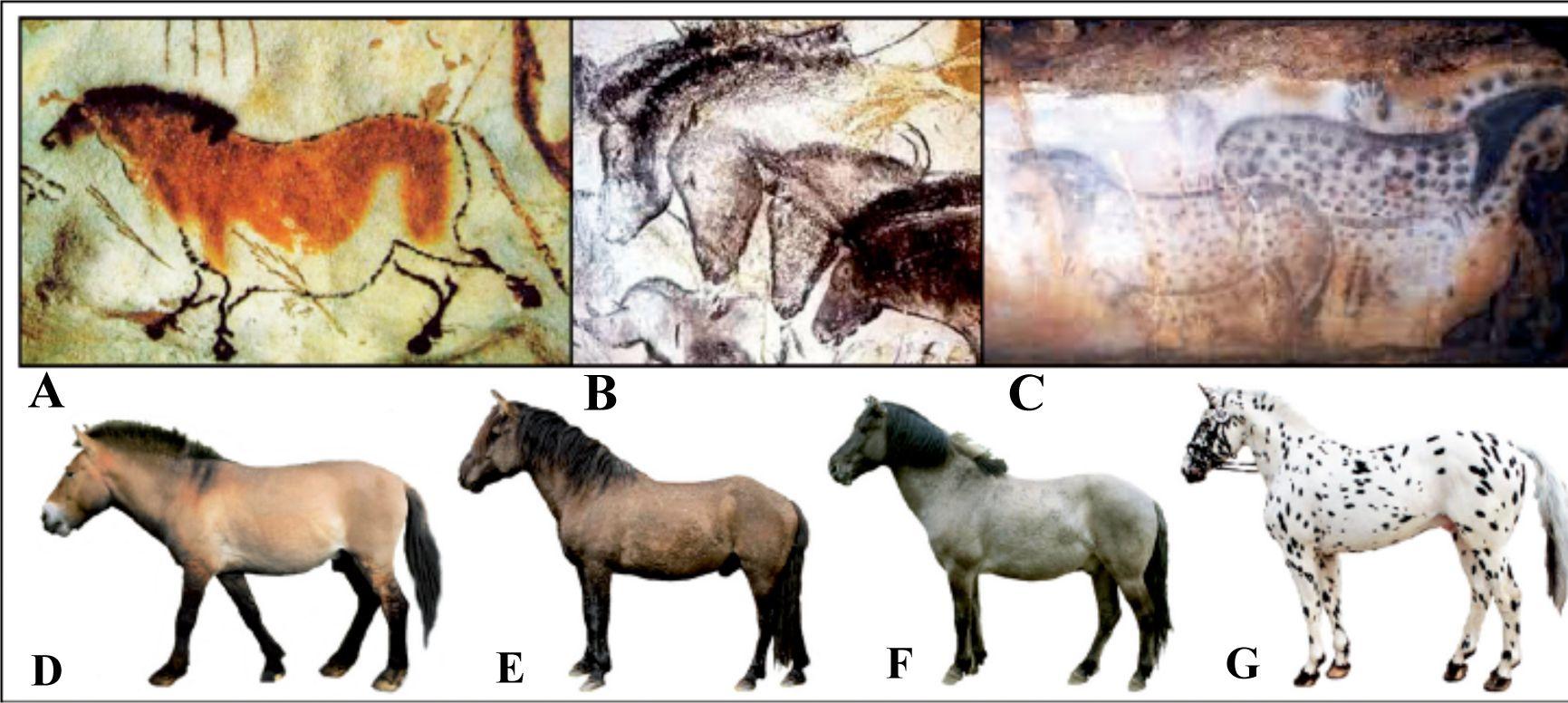 La capa que aparece en los caballos de Pech Merle (derecha), existía en el Paleolítico, según una investigación de la UAM