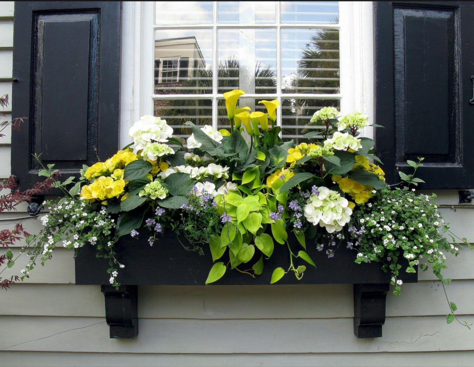 Fioriere Per Persiane ~ Outside plants orto giardino finestra e balconi