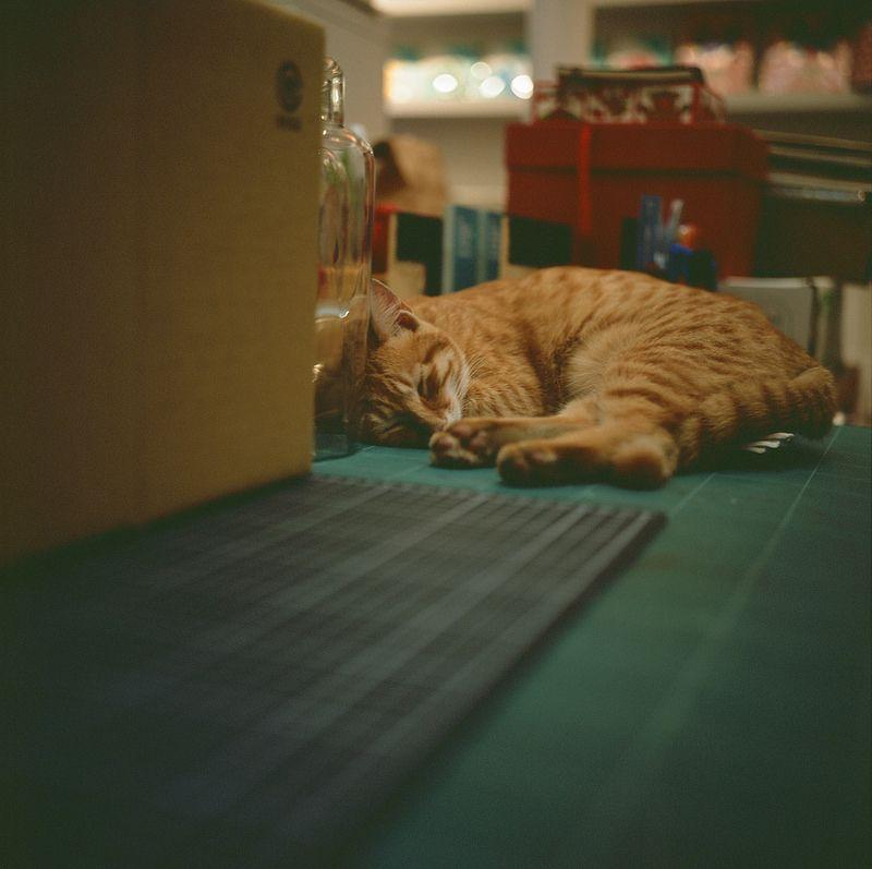 那深沉的夢 | Flickr - Photo Sharing!