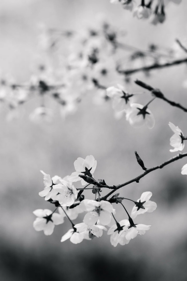 Pretty Blossoms (With images) Aesthetic objects