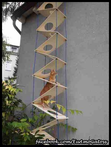 escalier pour chat chat pinterest escaliers chats et animal. Black Bedroom Furniture Sets. Home Design Ideas