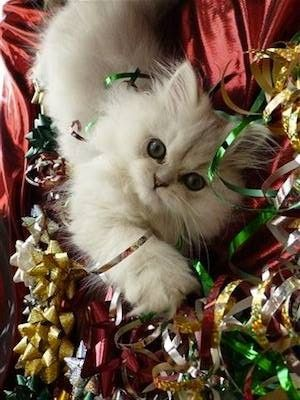 Pin By Debbie Pyle On Christmas Animals Christmas Animals