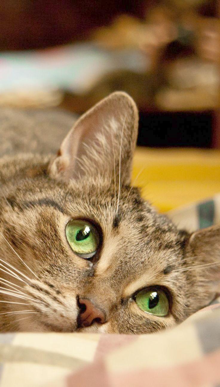 Found > Baby Cats Meowing super Kocięta, Kociaki, Kotki
