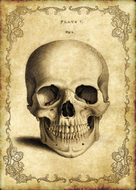 Victorian Goth Steampunk Antique Anatomy Skull - 5x7 Inch Single ...