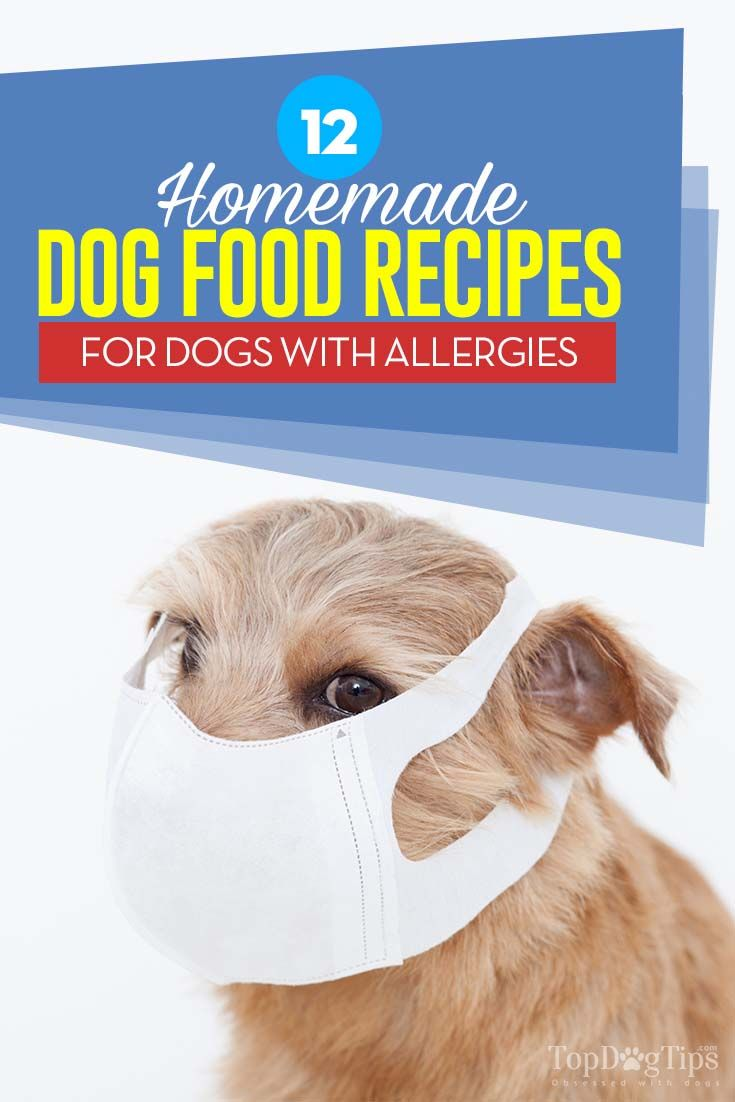 homemade dog food for dogs with allergies