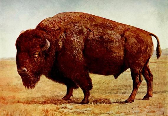BISON Will Kill You Metal Sign Vintage Look