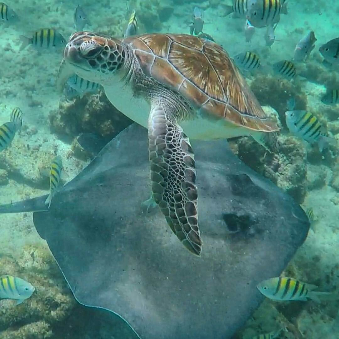 Sea Turtle & Stingray Animals are beautiful people