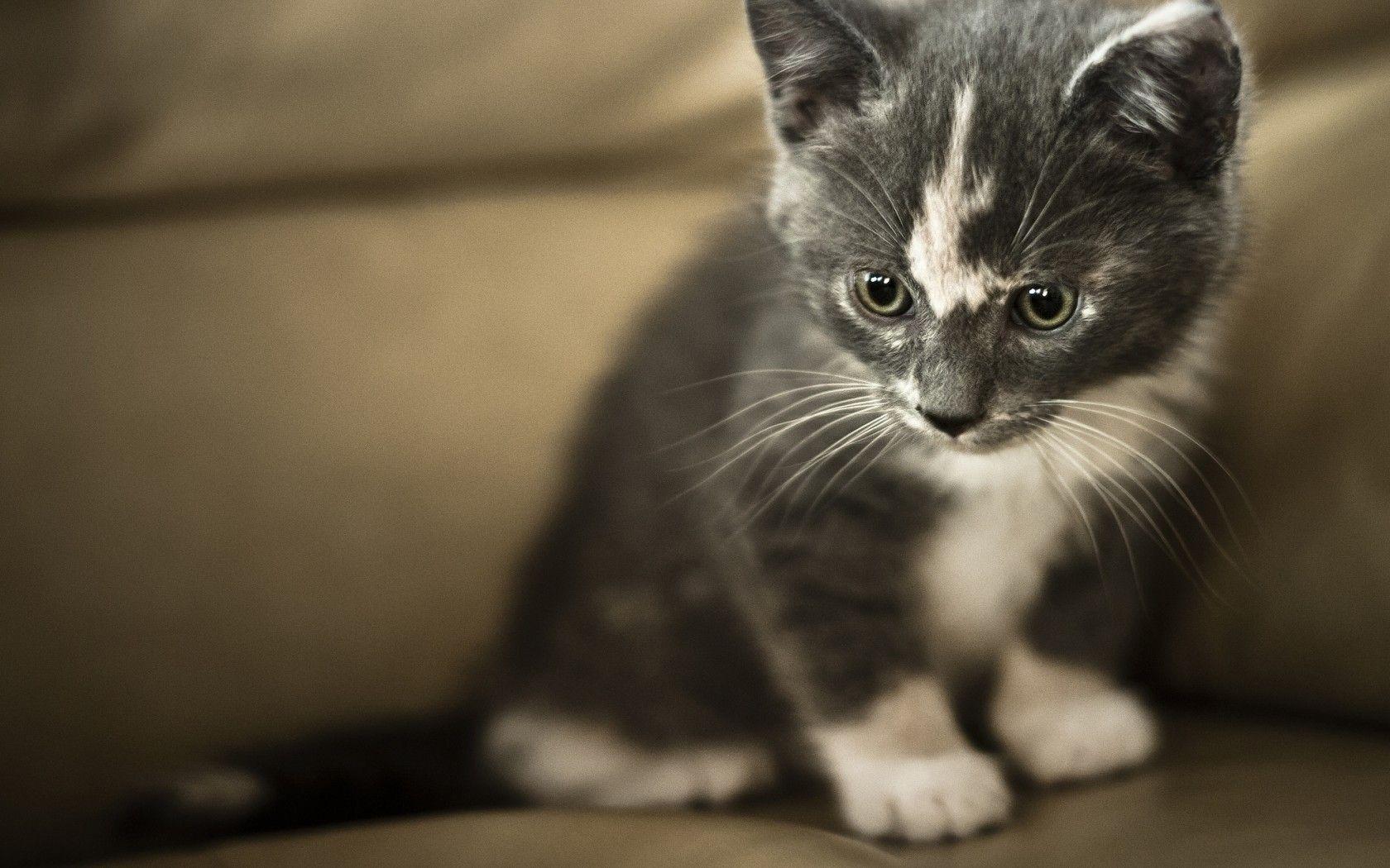 Cute little animals image by Yasir Kamran on Cute Grey
