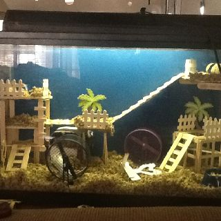 My Home Made Mouse Habitat I Made All Of It Out Of
