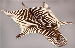 Afrikansk Zebra skind