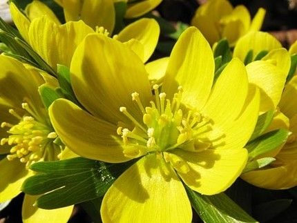 Perfect Yellow Flowers.