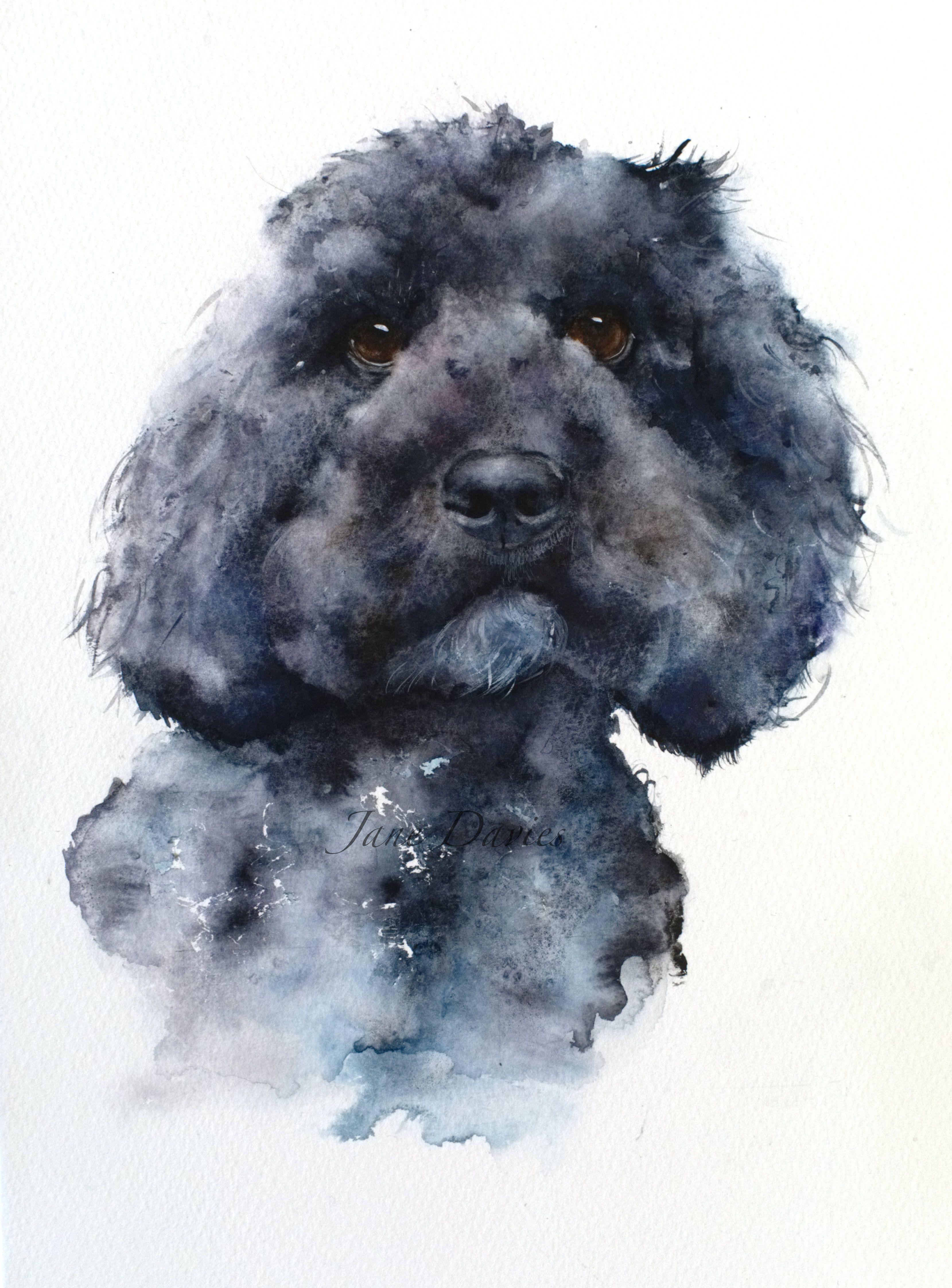 Pet Portrait Of A Cockerpoo Painted By Watercolour Artist Jane