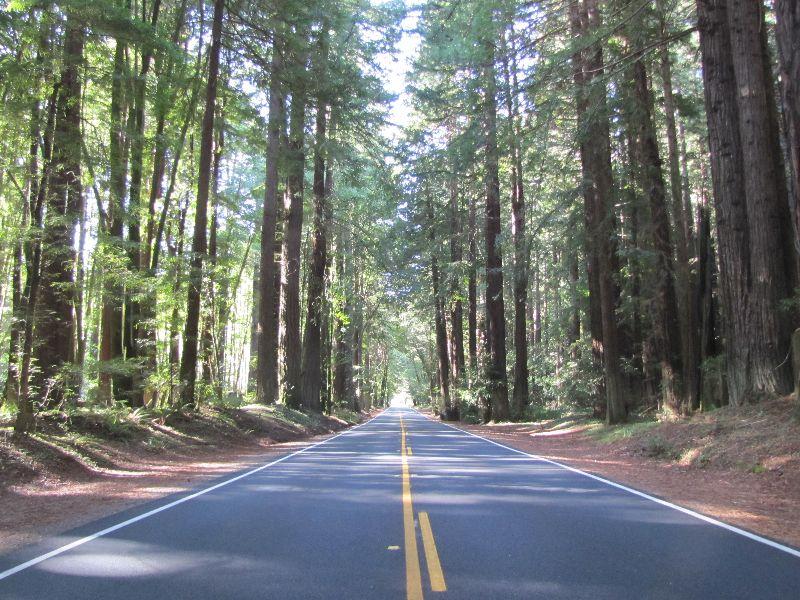 Navarro Redwoods State Park, California