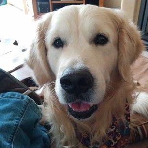 Fox Poo Shampoo Dogs Pets Pet Shop