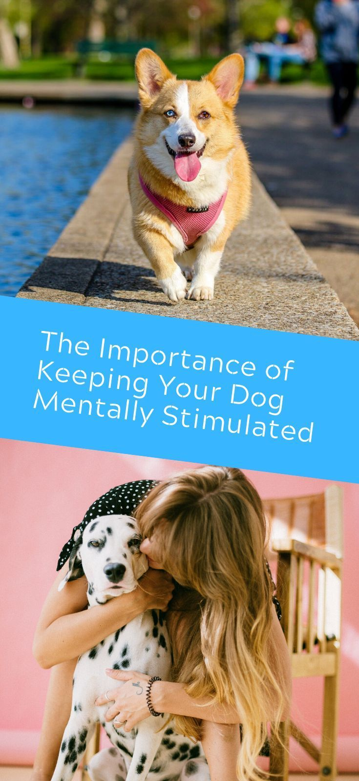 The Importance Of Keeping Your Dog Mentally Stimulated Your Dog