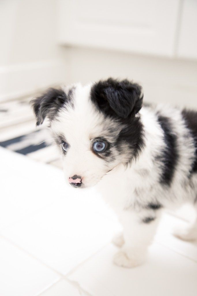 What Couples Should Know Before Getting A Puppy For The First Time | Their Wild Life ©