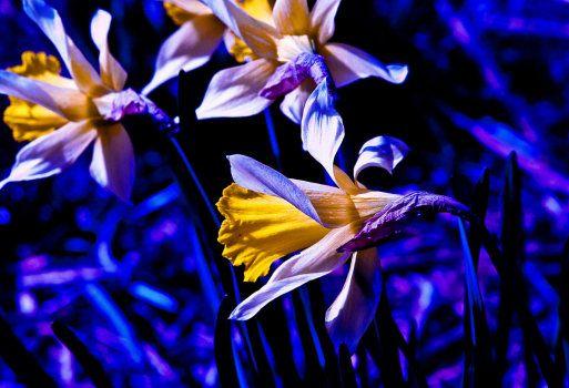 Los colores en el jardín: el azul y el violeta
