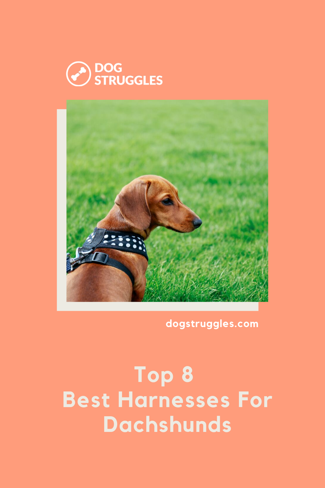 Top 8 Best Harnesses For Dachshunds Dachshund Big Dogs Dog