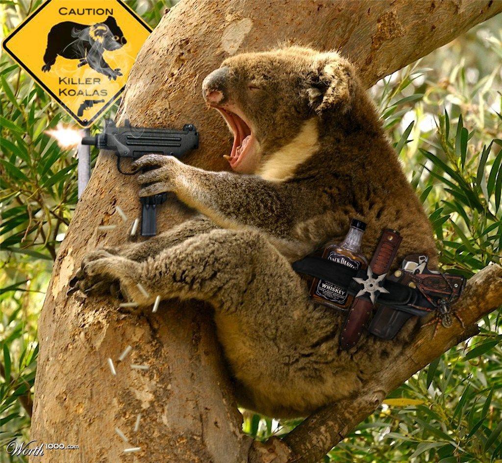 Koala, Koala Bear (phascolarctos Cinereus), Adult Koala Which Came ...