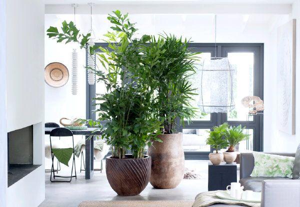 Modern Strak Interieur : Planten trends grote planten staan geweldig in een modern