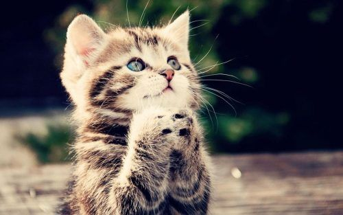Pin On Animal Pictures Cute kitty hd wallpaper