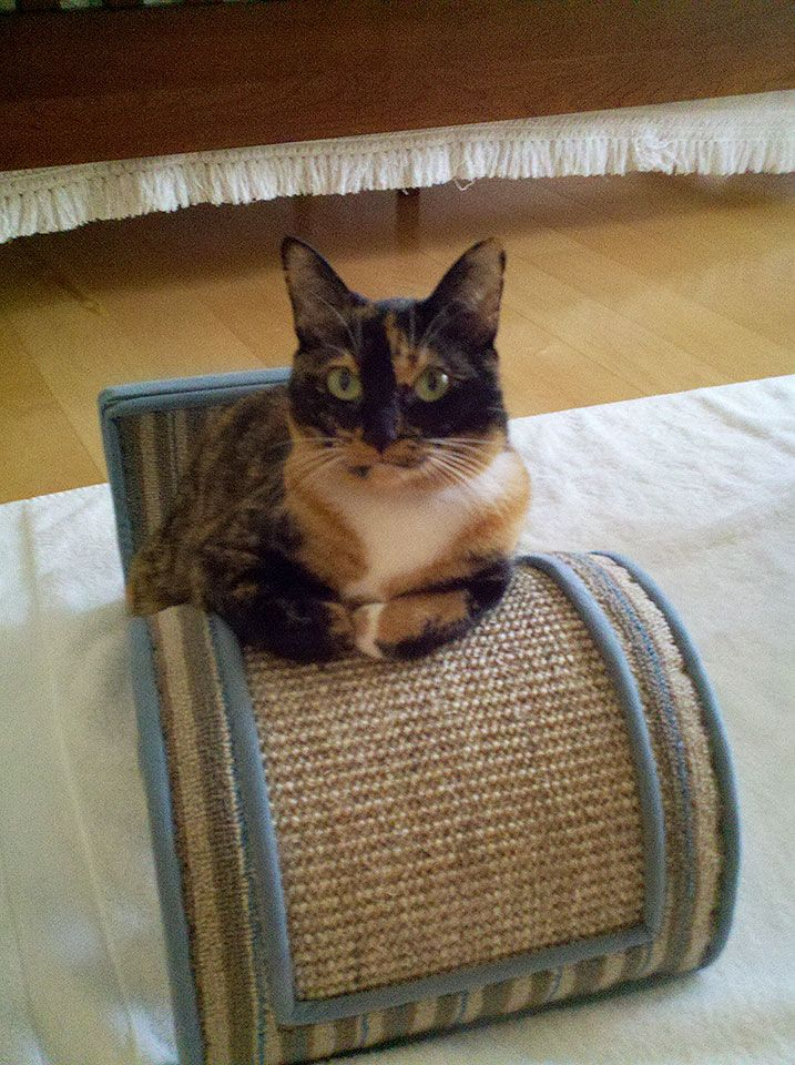 """From Linda """"Dr. Apatchy Longpaw is inthe Cat"""