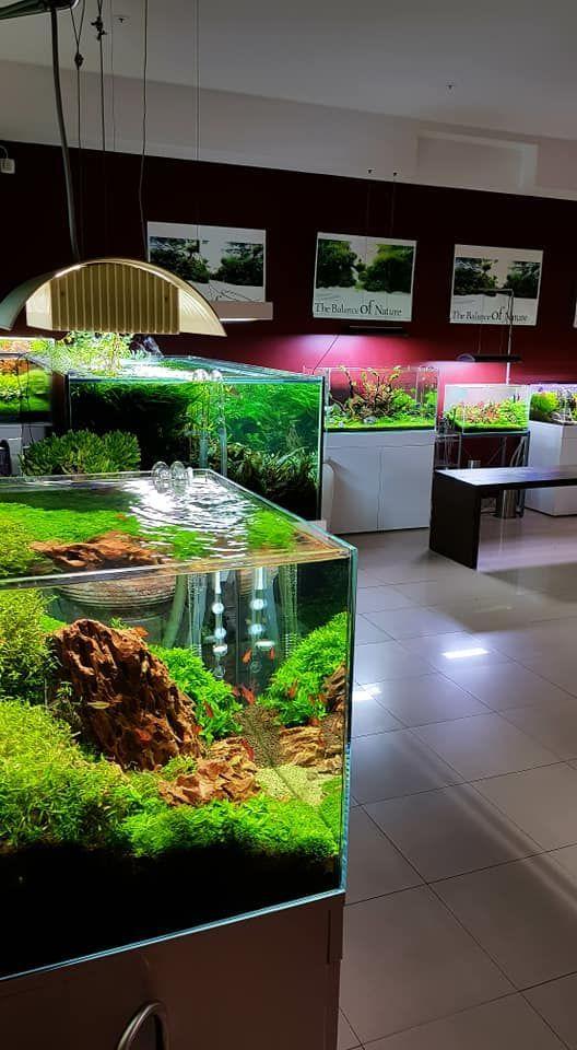 Aquascape   Aquarium, Aquaponics, Nature aquarium
