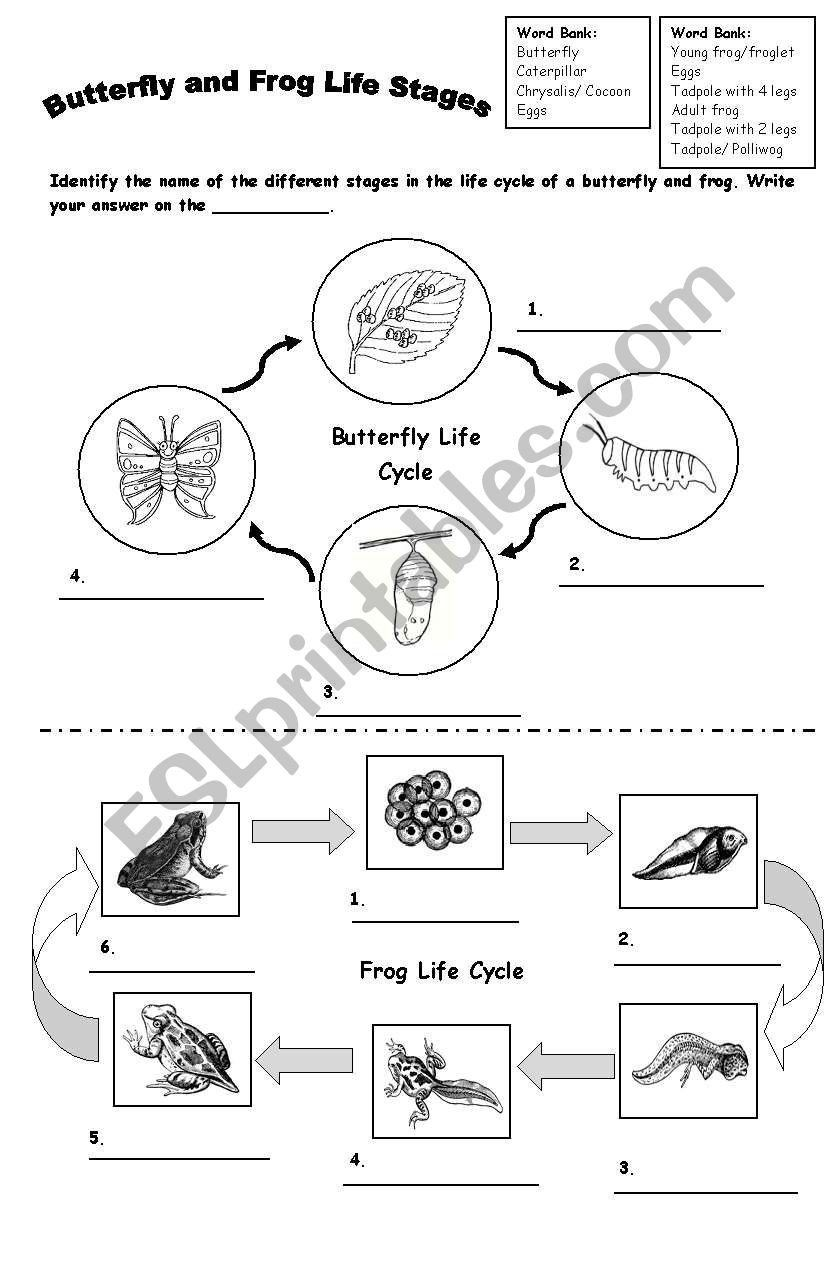 hight resolution of Butterfly Life Cycle Worksheet Preschool Frog and butterfly Life Cycle Esl  Worksheet by   Butterfly life cycle
