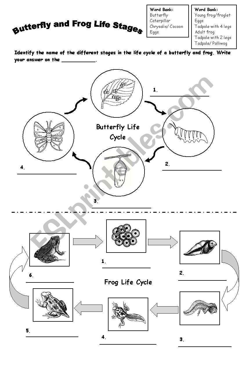 Butterfly Life Cycle Worksheet Preschool Frog and butterfly Life Cycle Esl  Worksheet by   Butterfly life cycle [ 1287 x 834 Pixel ]