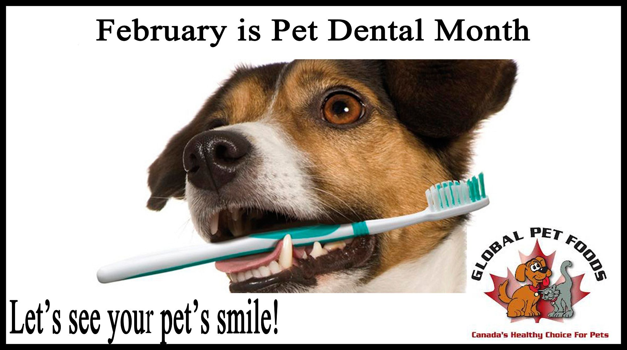 February is Pet Dental Month! Following a consistent