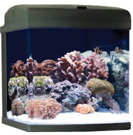 Jbj Mt 602 Led Nano Cube Cf Quad Lighting 28 Gallon Http Www Bestdiscountpetsupplies Com Jbj Mt 602 Led Nano Nano Aquarium Aquarium Discount Pet Supplies