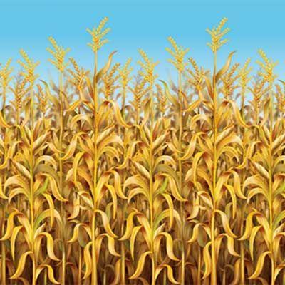 Cornstalks Background: Fall Backdrop, Thanksgiving Decor