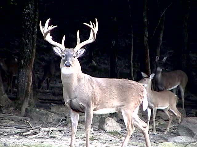big buck I wanna kill