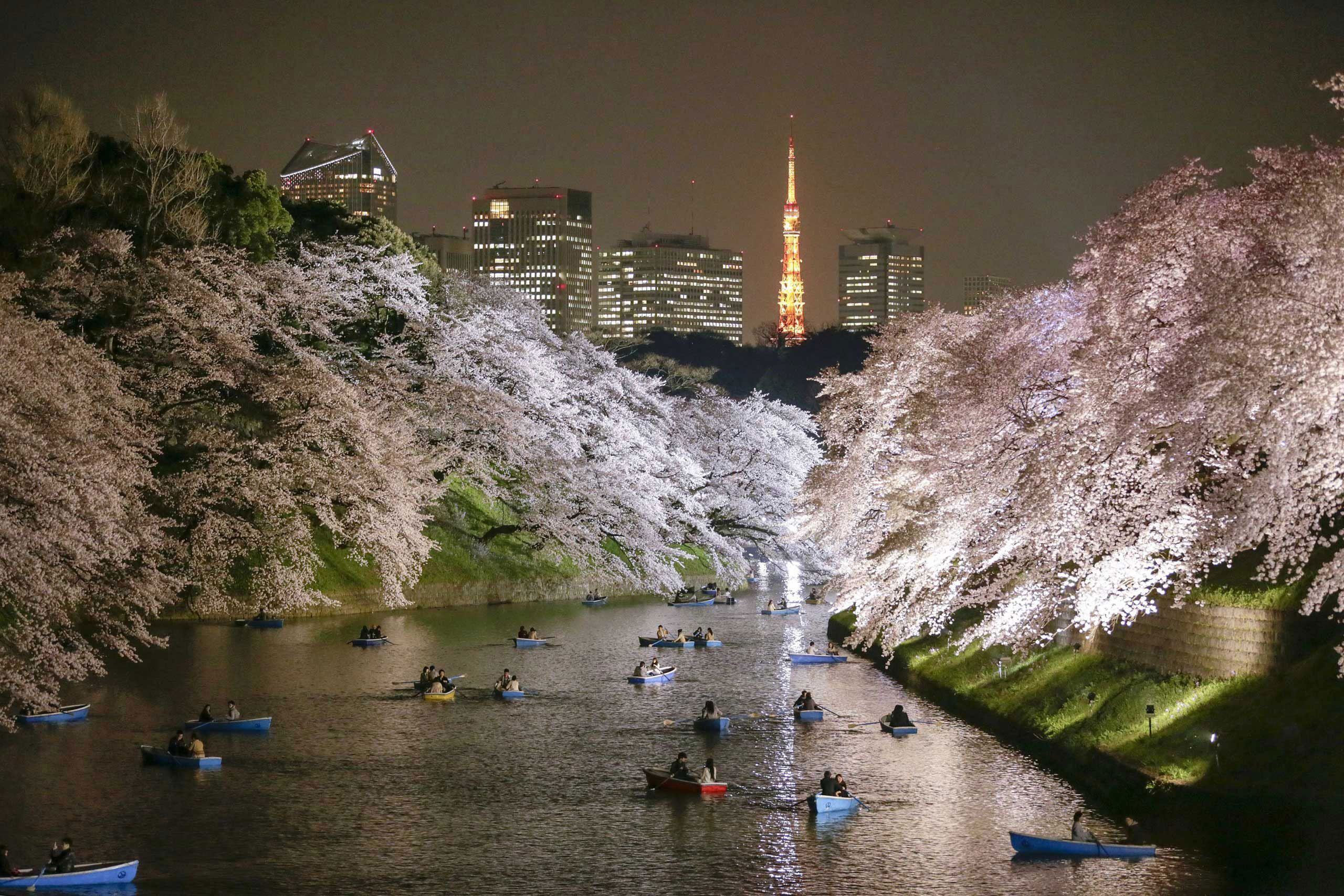 People Rowing Boats Enjoy Night View Of Cherry Blossoms In Full Bloom On Chidorigafuchi Moat In Tokyo Japan March 30 201 Tokyo Perfect Family Vacation Japan