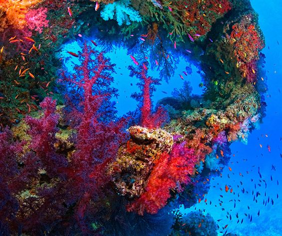 Underwater View Of Colorful Coral By Carson Ganci