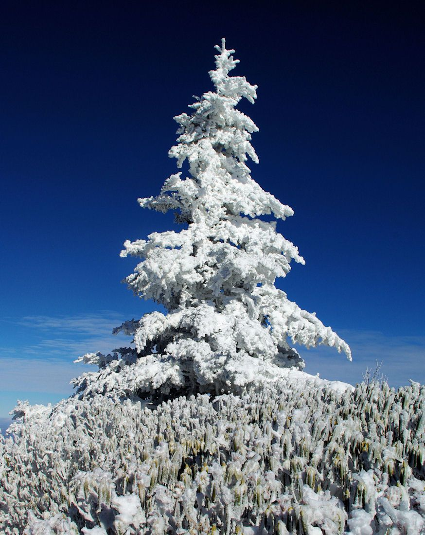 The perfect Christmas Tree in the North Carolina mountains along the ...