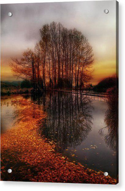 Golden Path by Albena Markova