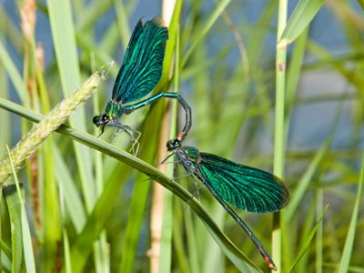 Damselfly - Google Search