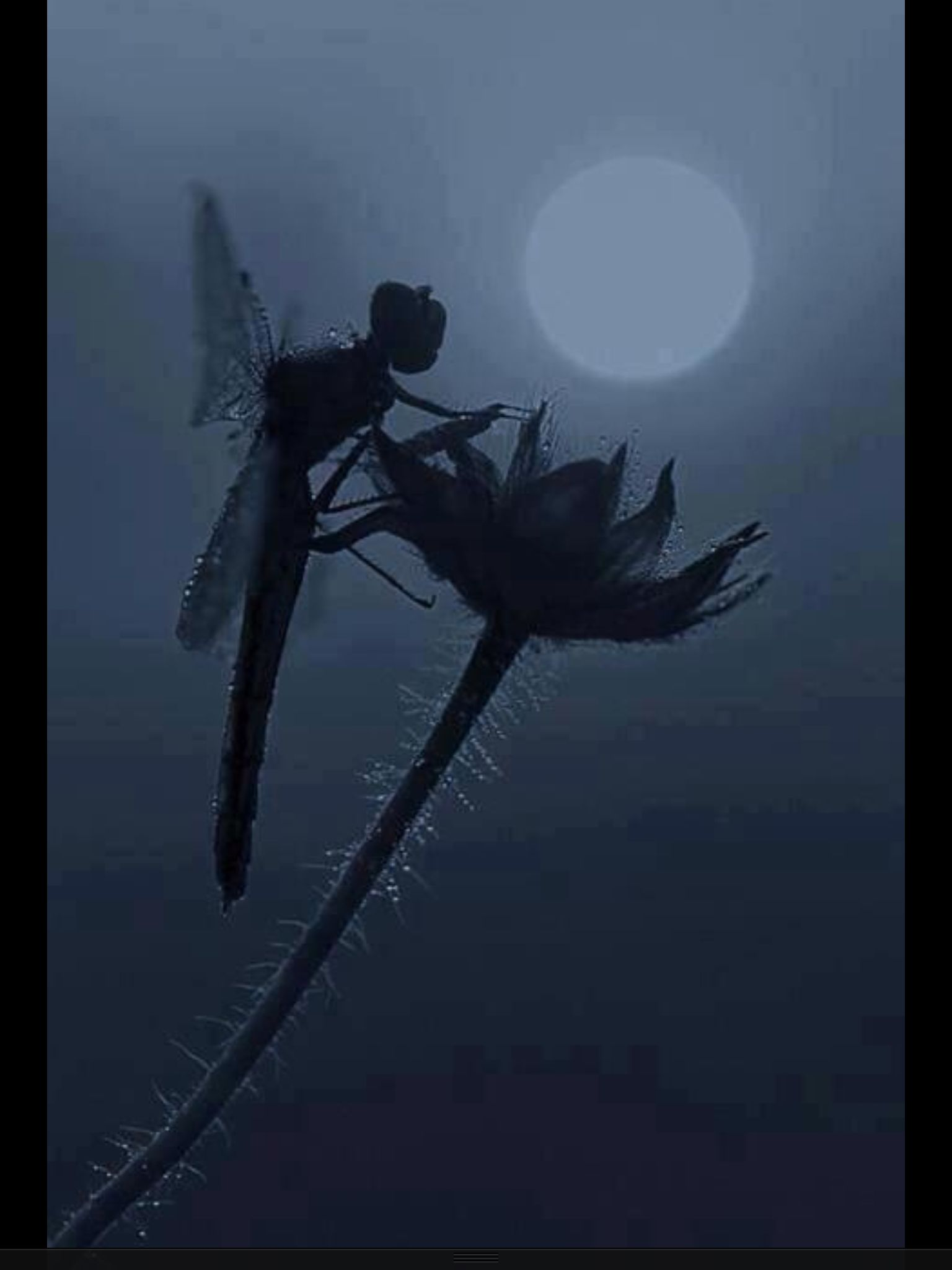 Dragon Fly, Looks Like A Fairy! | AMAZING PICTURES | Fairy, Insects