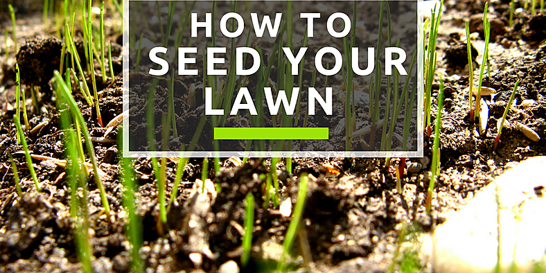 How To Seed Your Lawn Garden Center Oak Lawn Fasel And Sons Watering Grass Seeds Lawn